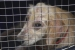 Congress approves bill expanding animal cruelty law